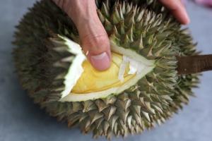 tips-memilih-buah-durian-yang-baik 1