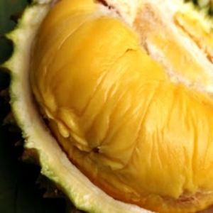 tips-memilih-buah-durian-yang-baik 2